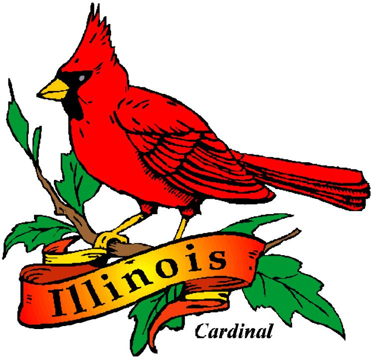 Illinois State Bird - Cardinal - 50States.com